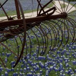 Bluebonnets and Farm Equipment