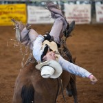 2014 Taylor Rodeo