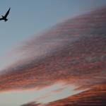 Birds & Sky