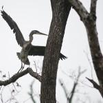 Heron & Squirrel