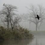 Birds in Fog
