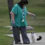 Cat on Leash