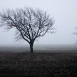 East Wilco Fog