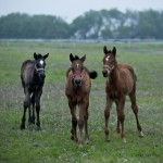 Foals Early Morning