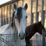 Horses & Baptist Church
