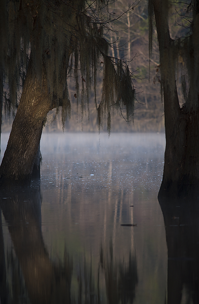 Caddo Lake, the only natural lake in Texas.