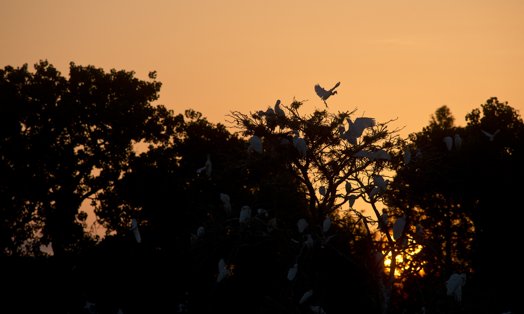 Early Morning at Rookery
