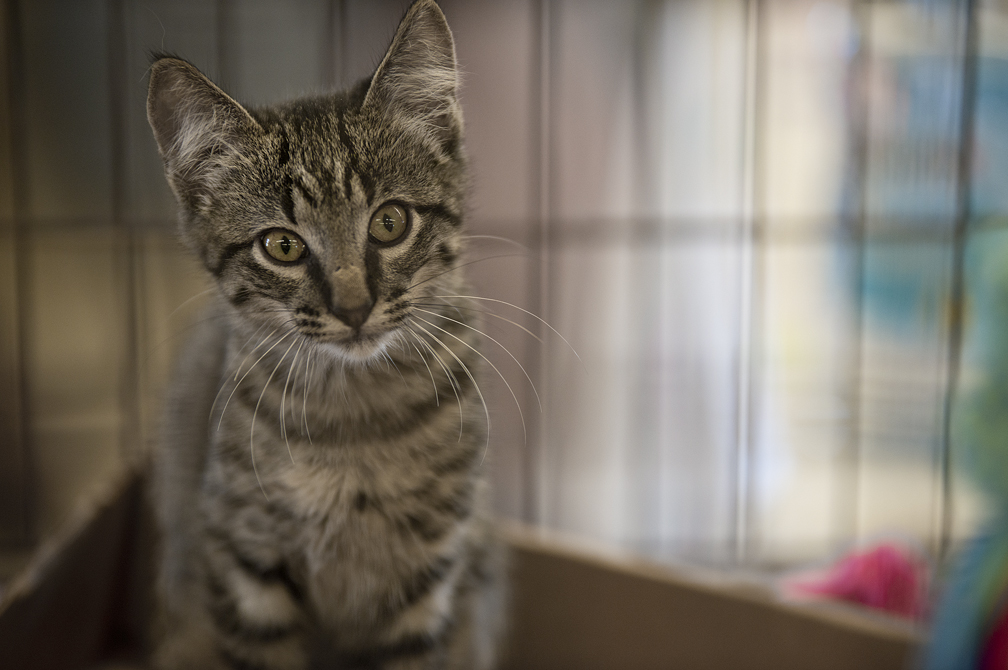 A kitten looking for a home.
