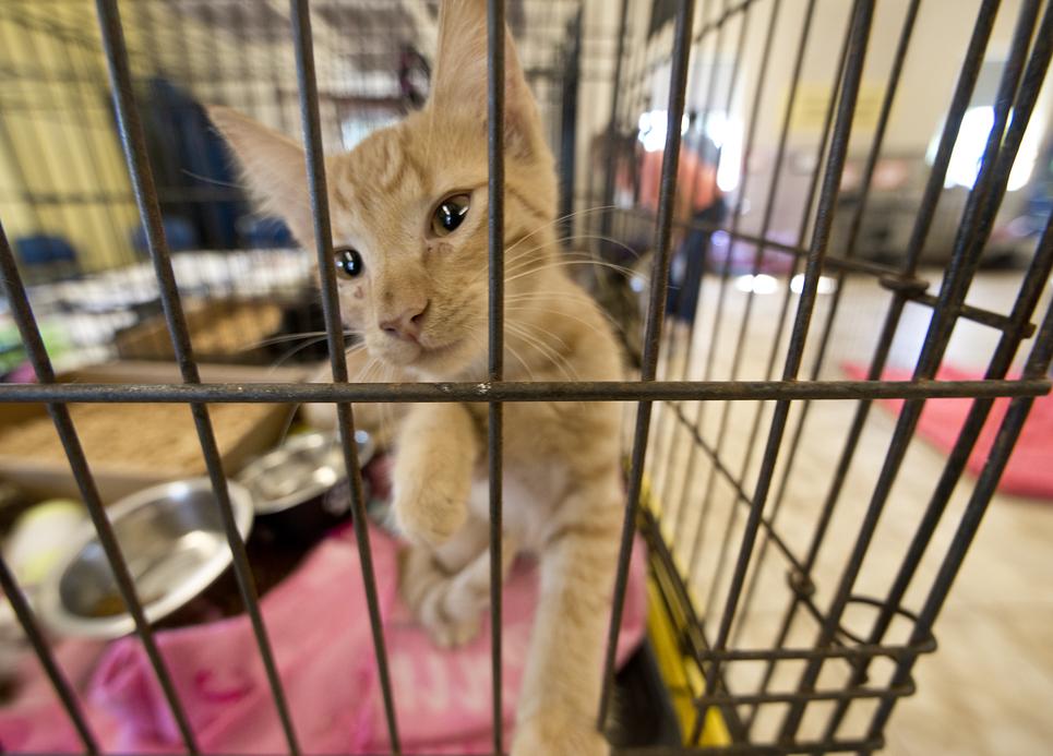 The shelter had an abundance of kittens needing forever homes.