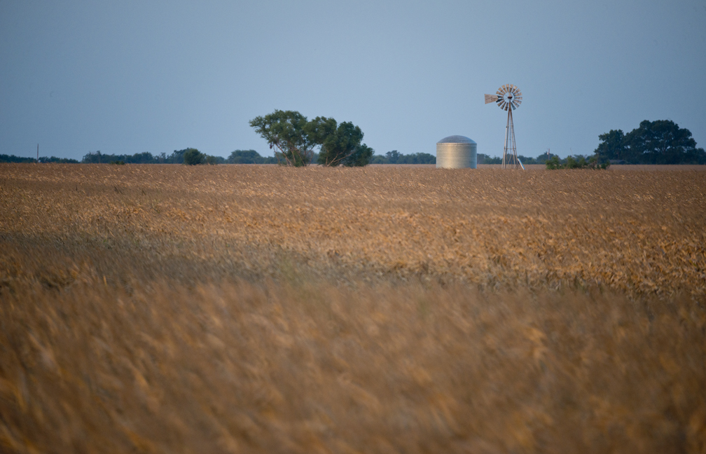 Corn Fields on C.R. 418