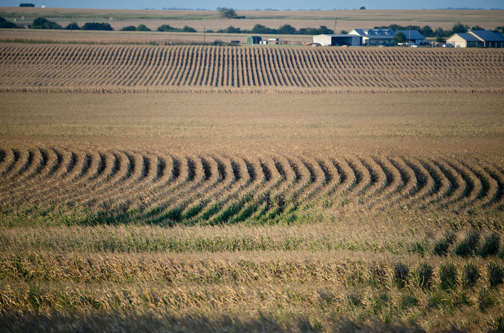 160713 EAST WILLIAMSON COUNTY, TEXAS: Corn fields dominate the landscape along County Road 127, near County Road 192 on Wednesday, July 13, 2016. Photo by Andy Sharp. 002